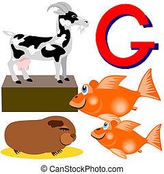 G goat, goldfish, guinea pig