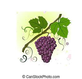 gałąź, winogrona