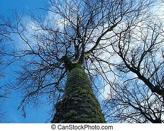 gałęzie drzewa