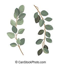 gałęzie, eukaliptus, tło., odizolowany, biały, komplet