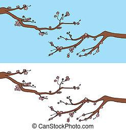 gałęzie, sakura, rozkwiecony