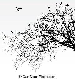 gałęzie