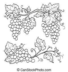 gałęzie, winogrono, skatch