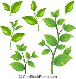 gałęzie, zielony, zbiór