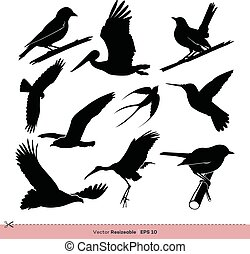 gabarit, conception, ensemble, vecteur, silhouette, illustration, oiseau