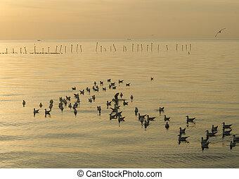 gabbiano, fondo, tramonto, mare