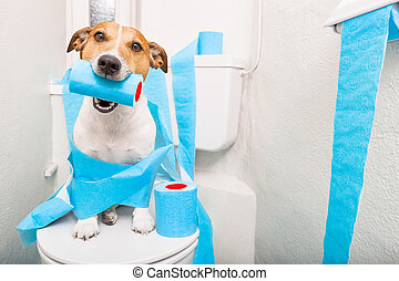 gabinetto, posto, cane