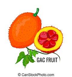 Gac fruit. Healthy orange vegetarian jackfruit food. Vector ...