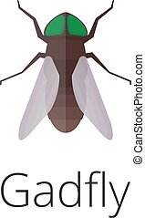 Gadfly skin parasite insect bug. Bug insect gadfly isolated...