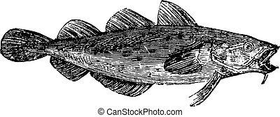 gadus, fish, spp., morue, ou