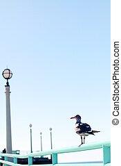 gaivota, com, céu azul, em, verão