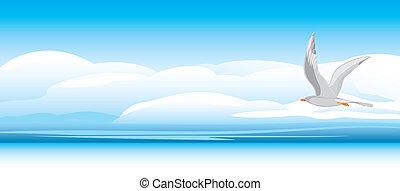 gaivota, fundo, skyscape