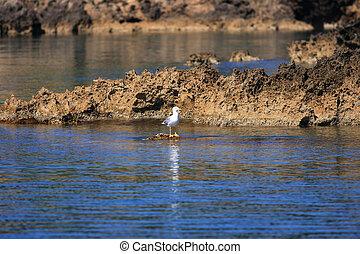 gaivota, pedras