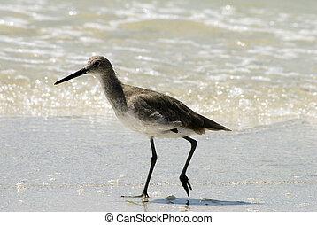gaivota, praia