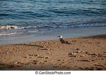 gaivota, praia, pássaro