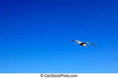 gaivota, soaring, em, a, azul, verão, sky., espaço vazio, para, seu, design.