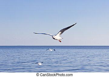 gaivota voa, ligado, céu azul
