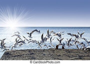 gaivotas, decolagem