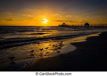 gaivotas, e, cais pescando, em, pôr do sol, em, forte, myers, praia, flórida