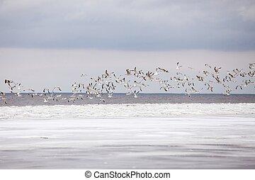 gaivotas, em, inverno
