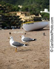 gaivotas, ligado, um, costa