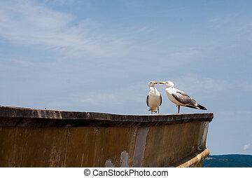 gaivotas mar
