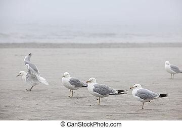 gaivotas, praia, nebuloso
