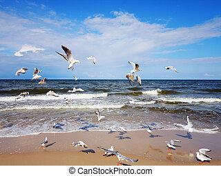 gaivotas, sobre, a, mar, ondas