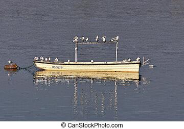 gaivotas, um barco, em, amanhecer
