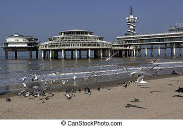 gaivotas, voando, praia, de, scheveningen