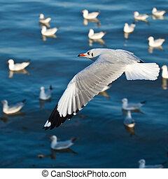gaivotas, voar, a, mar