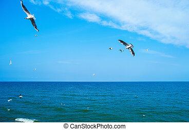 gaivotas, voar, mar