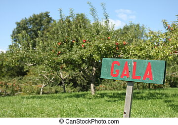Gala Apple Sign - Sign in apple orchard identifying the type...