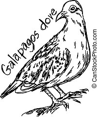 Galapagos dove - vector illustration sketch hand drawn with black lines, isolated on white background