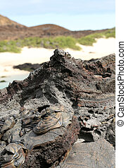 Galapagos Islands Lava flow