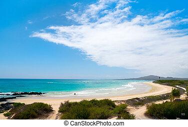 Galapagos, playa,  isabela,  Ecuador, isla