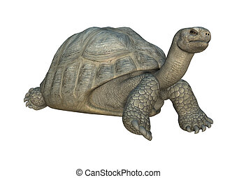 Galapagos Tortoise - 3D digital render of a Galapagos...
