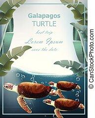 Galapagos turtles Vector. Summer sea card with cute turtles