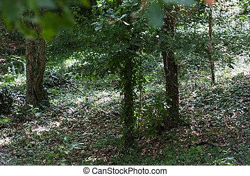galicia, wälder, spanien