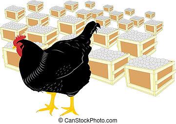 galinha, e, ovos