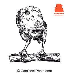 galinha, ficar, ligado, a, poleiro