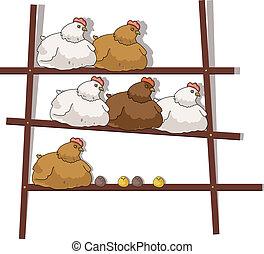 galinhas galinhas