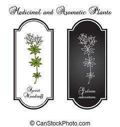 galium, woodruff, zoet, odoratum, geneeskrachtige plant