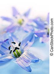 galleggiante, fiori