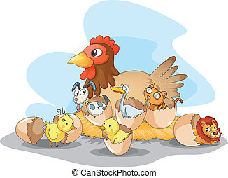 gallina, animali