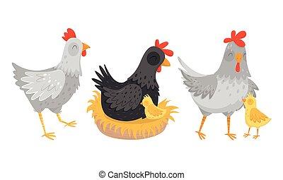 gallina, cerca, conjunto, huevos, sentado, vector, polluelos, ambulante