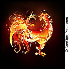 gallo, fuego