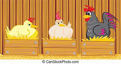 gallo, granero, gallina