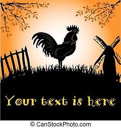 gallo, o, gallo, en, el, plano de fondo, de, sol de la mañana