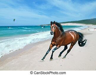 galloping, baía, esportiva, alemão, garanhão, em, abertos, manege